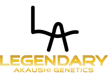 Legendary Akaushi Genetics