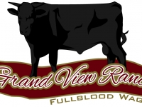 Grand View Ranch 100% Full Blooded Bulls For Sale